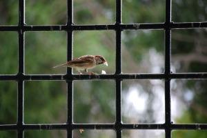 bird-652575_1280
